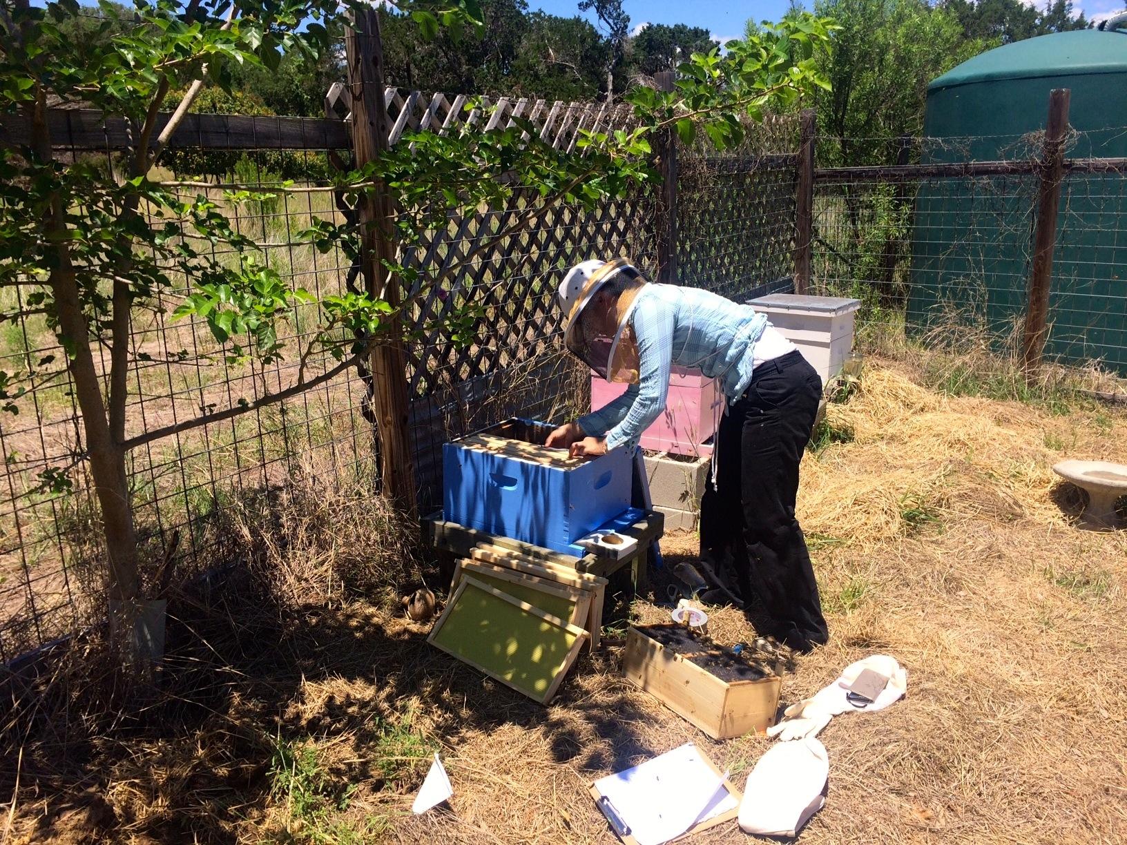 Pollinators–Part II: Bees