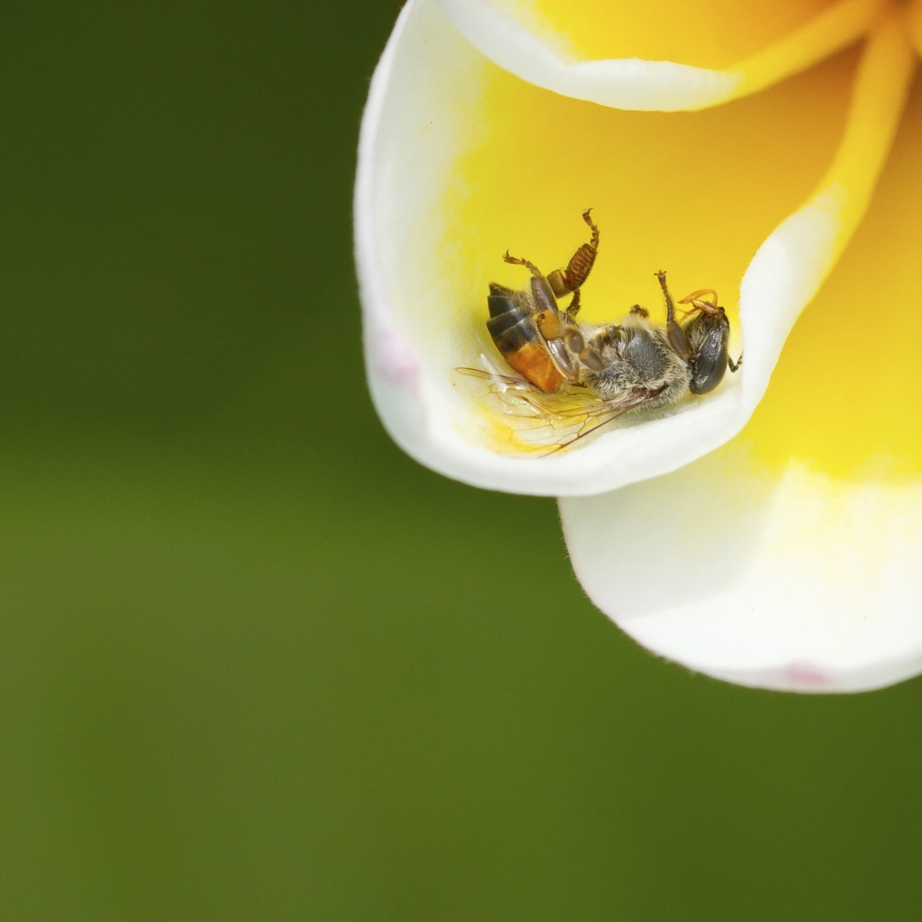 Let's Keep our Bees