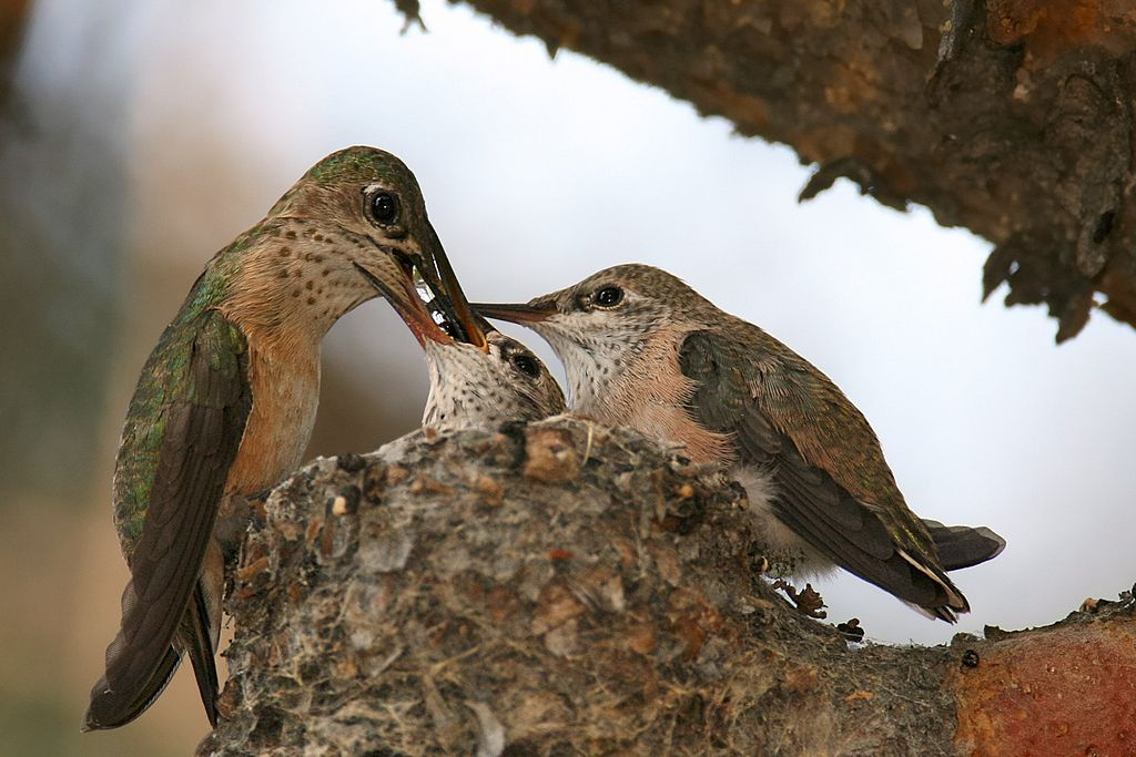 The Gift of Hummingbirds